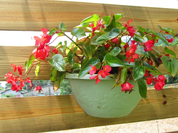 nature-landscapes_other_potted-flowers_1599